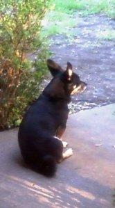 Mr. Black - 7-2011