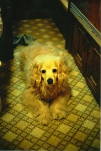Scan0062_062