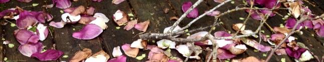 magnolia_antennas
